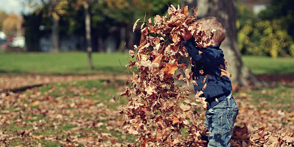 Ramassez les feuilles mortes