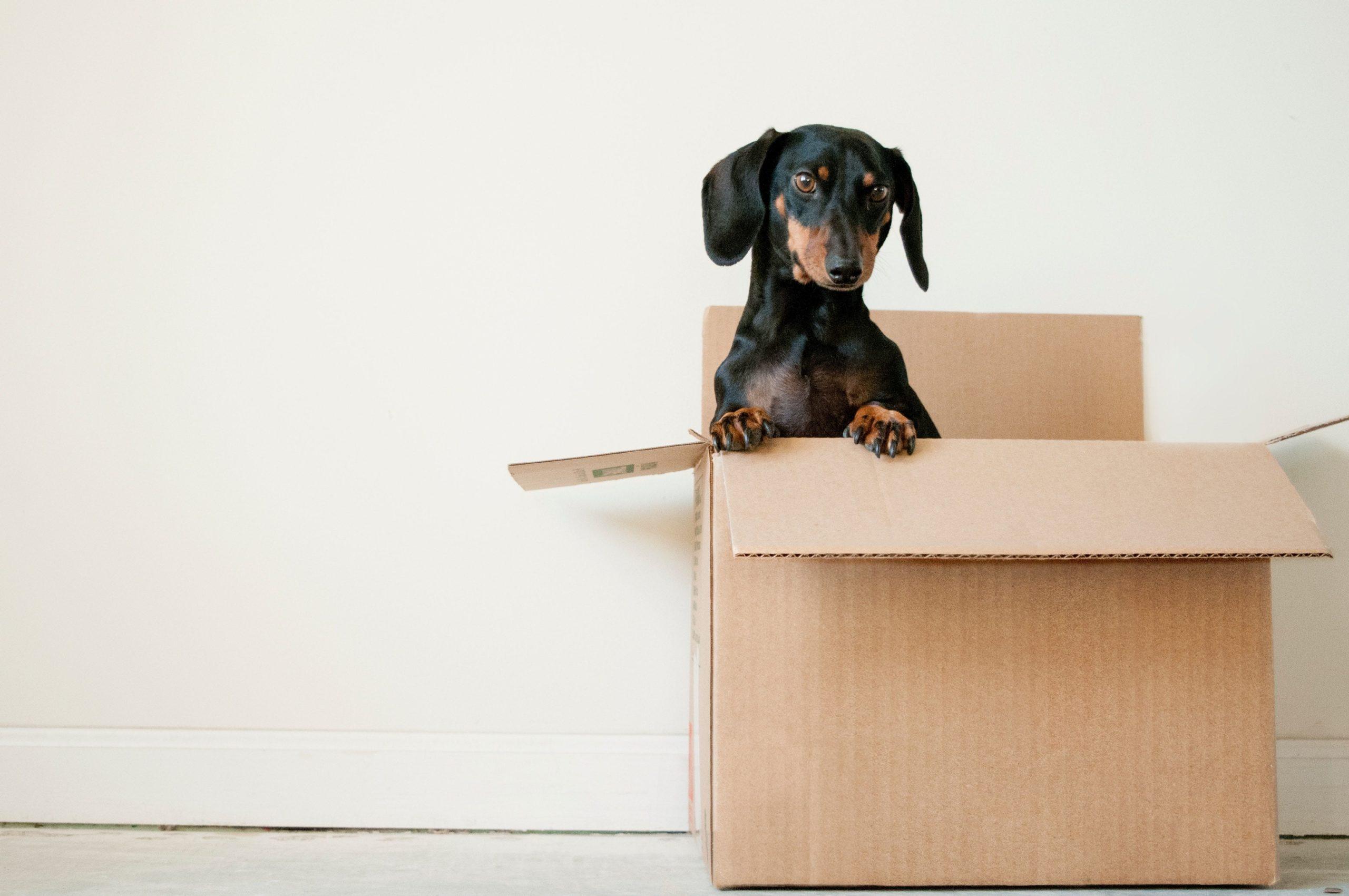 Covid : comment déménager en période de confinement ?